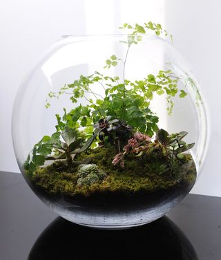 Terrarium photo 2
